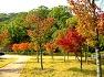 영천 임고서원 은행나무